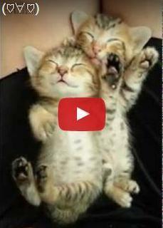 イタズラしても起きない熟睡中の子ネコ.jpg