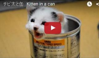 ネコ缶の子猫.jpg